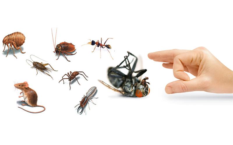 Expert Pest Control Service