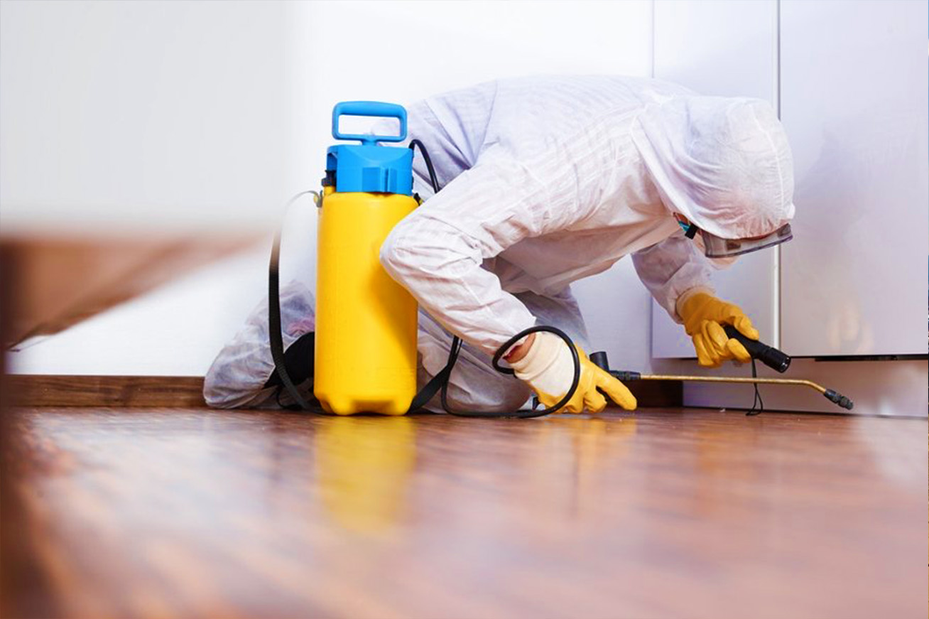 pest control services in nelspruit